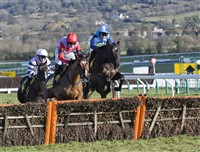 Cheltenham Gold Cup Day Tour