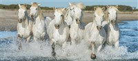 Historic Provence & The Camargue