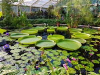 Londons Historic Gardens