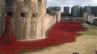 London - Poppies: Weeping Window