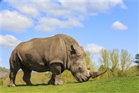 West Midlands Safari Park Day Tour